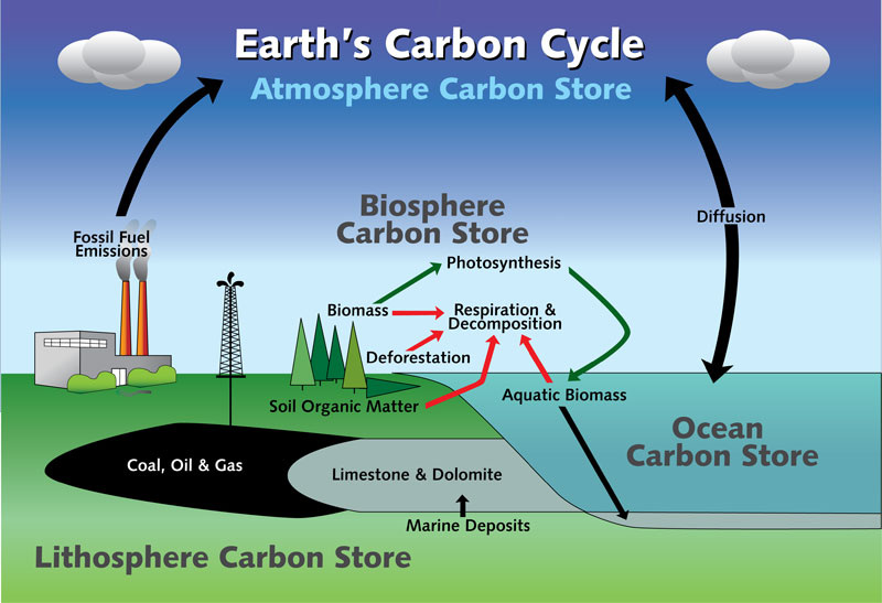 Hydrologic and carbon cycle notes joseph solis marine science more and more carbon is being released making the planet hotter and the cycle of it is going to repeat every time 9 diagram the carbon cycle below ccuart