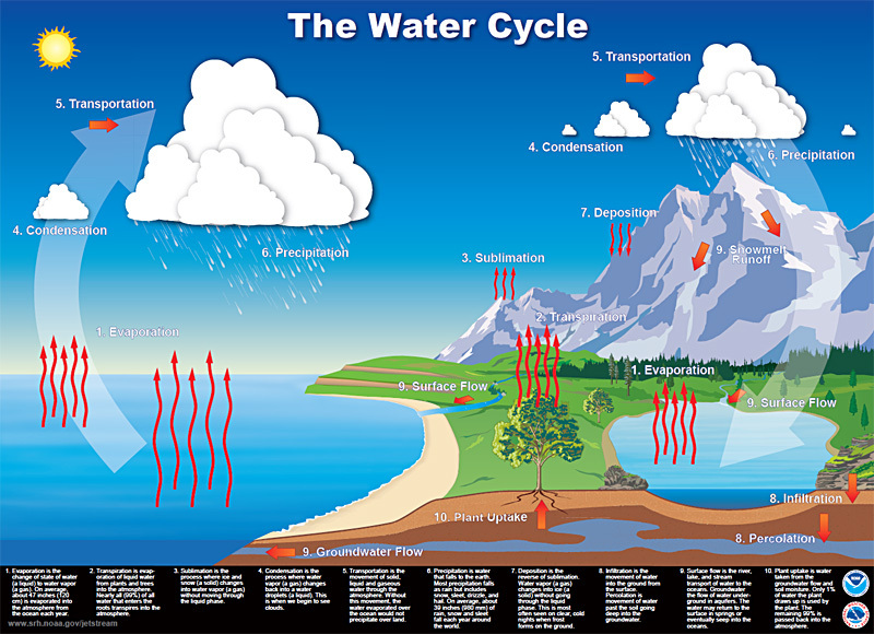 Hydrologic and carbon cycle notes joseph solis marine science all living things need nitrogen and phosphorus 2 what percentage of the human body is carbon 19 3 how are plants involved in the carbon cycle ccuart
